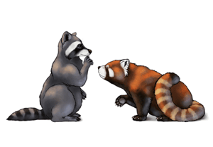 Drawing redpandas racoons preview