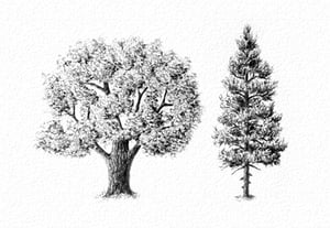 How to draw trees prev