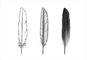 Draw feathers preview min