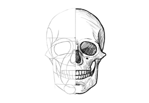 How to draw skull front preview