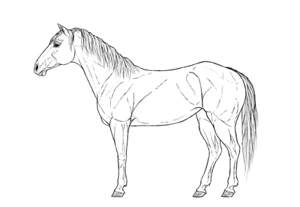 How to draw a horse preview