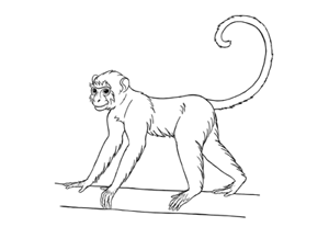 How to draw a monkey preview