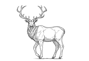 How to draw deer preview