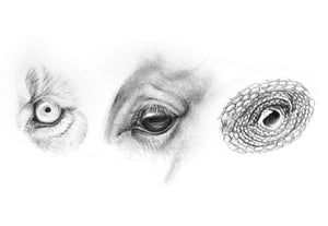 How to draw animal eyes preview