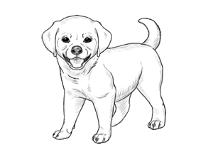 How to draw puppy preview