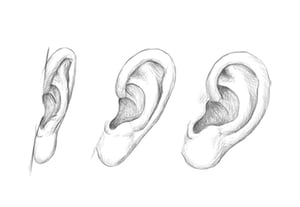 How to draw ears previeqw