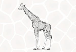 How to draw giraffe preview