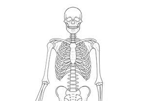 How to draw skeleton preview