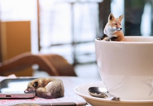 Coffee foxes preview