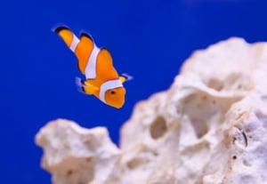 25 underwater pictures