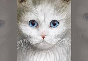 Cat port 400x277