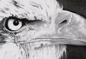 Eagle preview