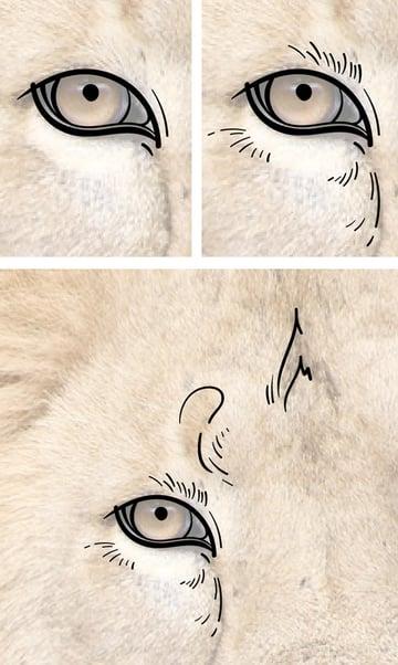 Add more details around the eye