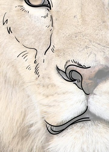 Move to the nose and mouth of our lion