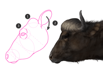 cape buffalo head