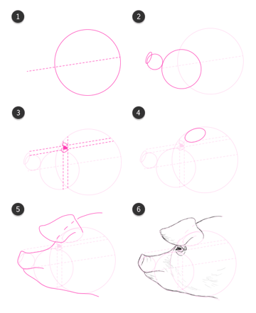 how to draw pig head side profile