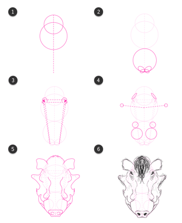 how to draw warthog head front