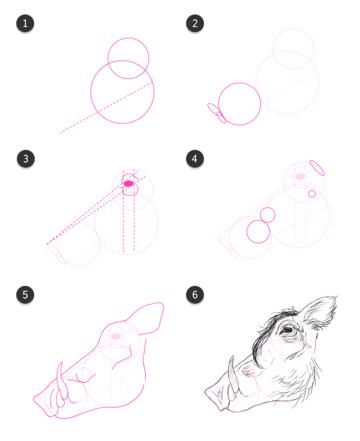 how to draw warthog head side profile