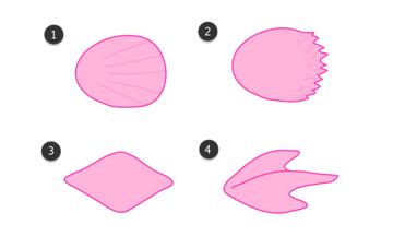 fish scales types draw