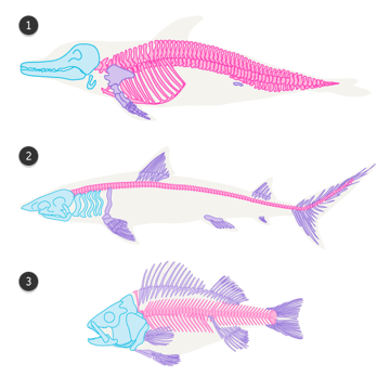 dolphin whale shark fish difference comparison