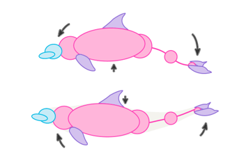 dolphin whale movement swimming poses