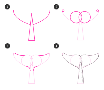 doplhin whale tail flukes flippers how to draw