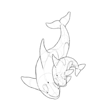 how to draw killer whale baby 5