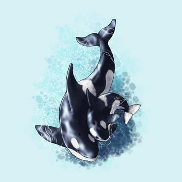 how to draw killer whale baby 6