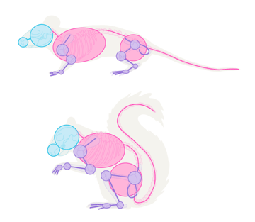small rodents skeleton simplified mouse squirrel