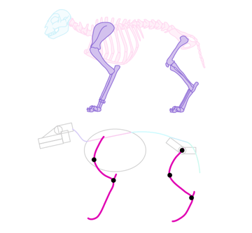 animal how to draw legs perspective