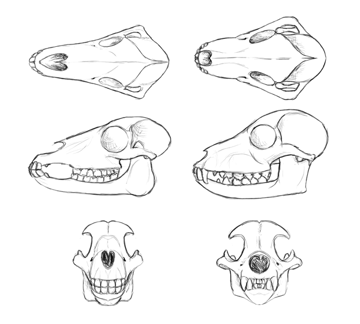how to draw animal skull in perspective