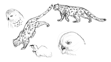 animation animal griffin sketches warm up