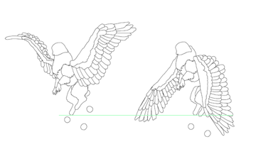 animation animal griffin flight flying wings draw photoshop body 12