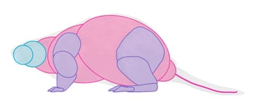 how to draw beaver body 2
