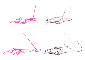 how to draw beaver feet paws flippers