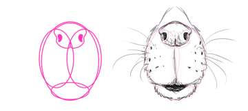 how to draw beaver nose mouth snout