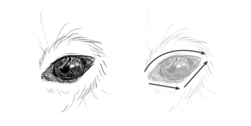 how to draw capybara eyes