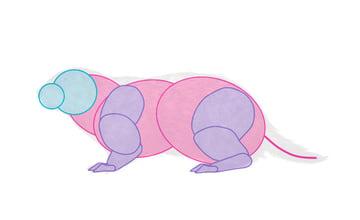 how to draw groundhog body 2