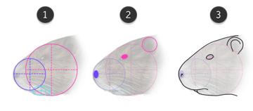 how to draw nutria head