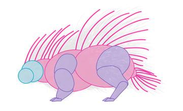 how to draw porcupine body 2