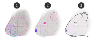 how to draw porcupine head