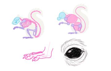 small rodents tutorial