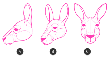 kangaroo how to draw head 9