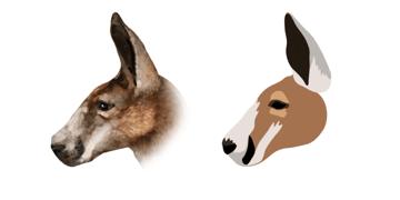 kangaroo stripe face head