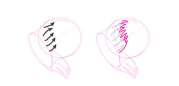 koala how to draw ears 5