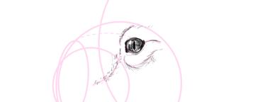 koala how to draw eyes 4