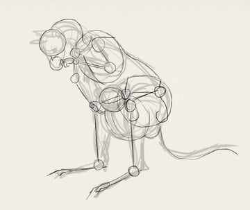 how to draw kangaroo koala illustration 2