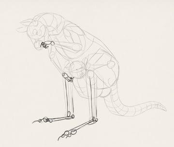 how to draw kangaroo koala illustration 5