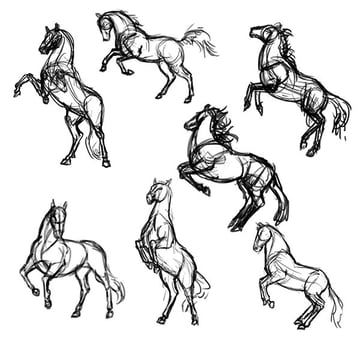 how to draw horse reference