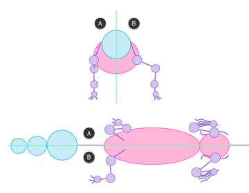 crocodile skeleton drawing anatomy 3